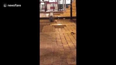 【衝撃!】パリ観光地でネズミが大量出現!何かの前兆???