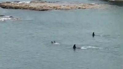 【衝撃!】サメ??ニュージーランドの入り江で泳ぐ子供に大接近!
