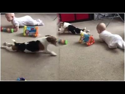 【いいね!】犬が赤ちゃんのマネしてる〜!