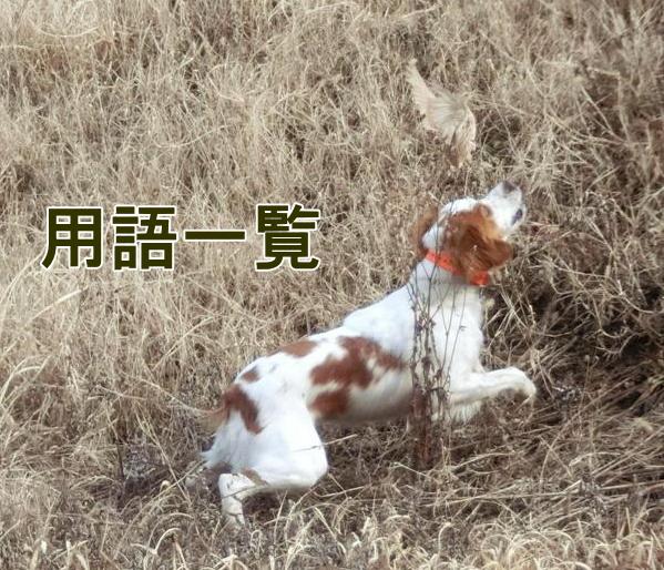 猟犬(トライアル)用語