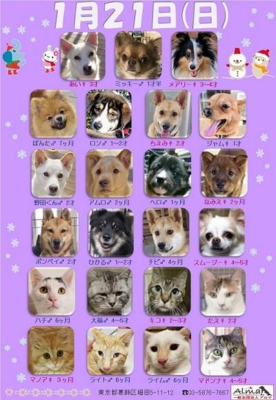 ALMA ティアハイム2018年1月21日 参加犬猫一覧