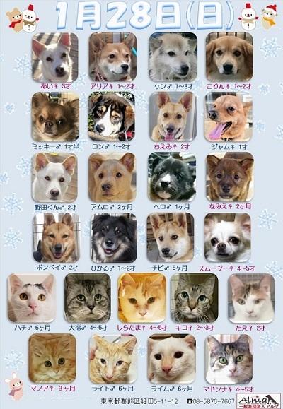 ALMA ティアハイム 2018年1月28日 参加犬猫一覧