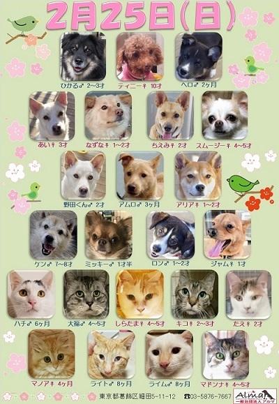 ALMA ティアハイム 2018年2月25日 参加犬猫一覧