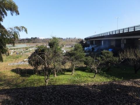 中津川橋と中津川右岸堤防