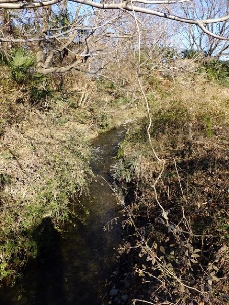 相模川河川敷内を流れる鳩川