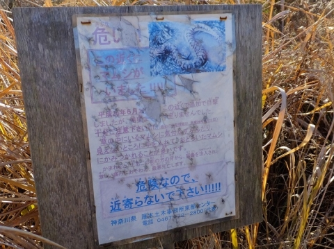 鳩川のマムシ注意看板