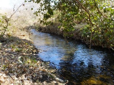 鳩川河口付近