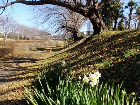 鳩川左岸散策路・海老名市相模三川公園内