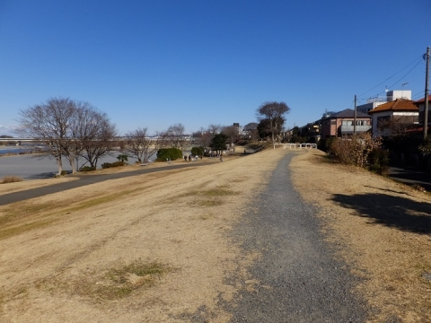 相模川左岸堤防・相模三川公園
