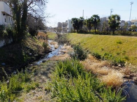 鳩川に排水路が合流・海老名市下今泉
