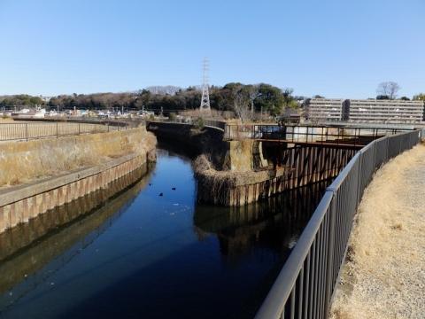 鳩川左岸に排水路が合流