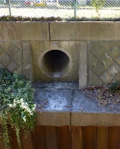 鳩川に流れ込む雨水下水管