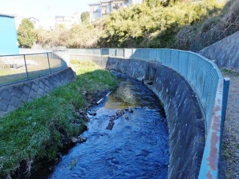 たけい橋上流の鳩川