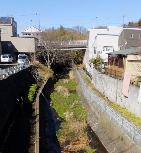 上磯部橋下流の鳩川