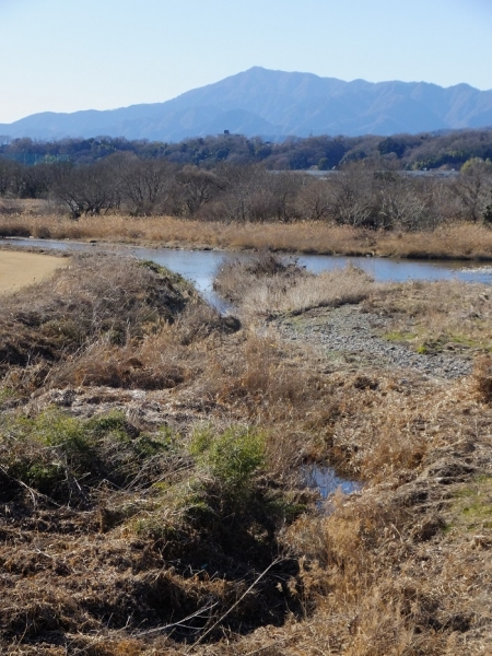 相模川に合流する鳩川隧道分水路