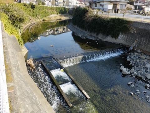 鳩川・八幡橋上流