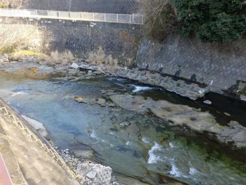 鳩川・谷戸橋下流