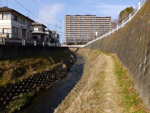 鳩川・今橋下流