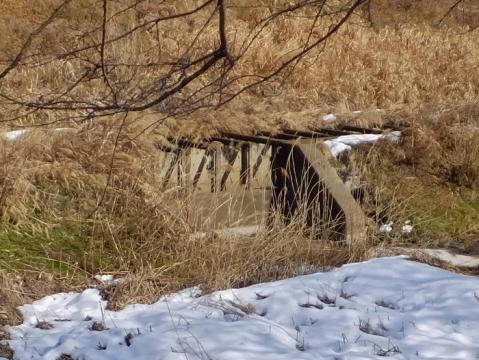 鳩川右岸の越流堤・四ッ谷さくら橋上流