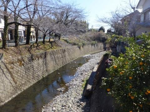 田島橋より姥川下流を望む