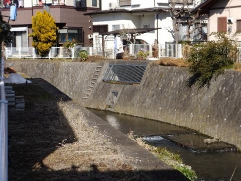 姥川田中橋上流の越流堤?&排水口?