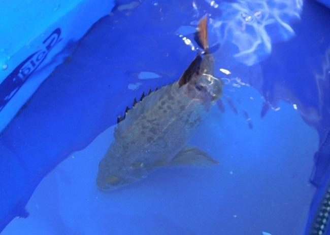 ゆっくり釣り3002 (2)