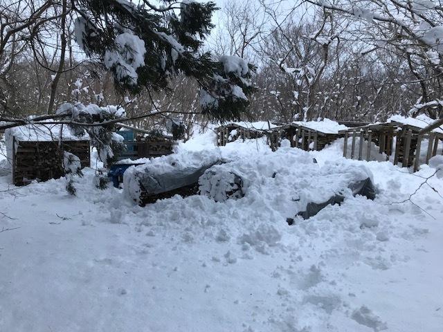 数年に1度の大雪12