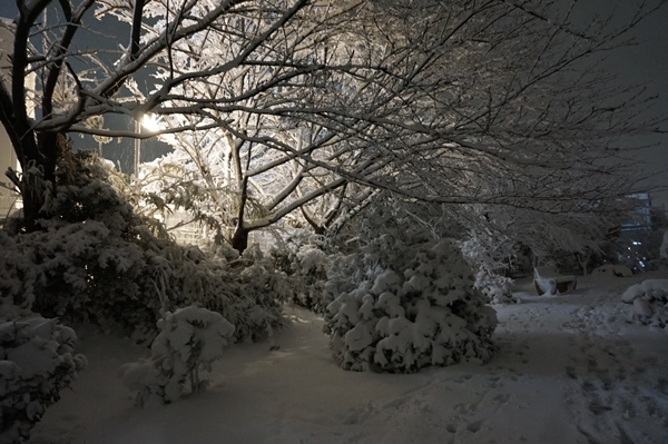 2018-1雪2