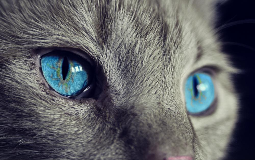cat-1285634_1920_convert_20180120153753のコピー