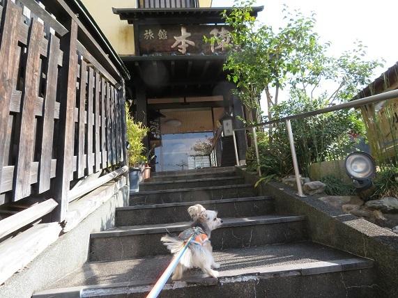 8L01 犬同伴可の温泉 本陣 0103