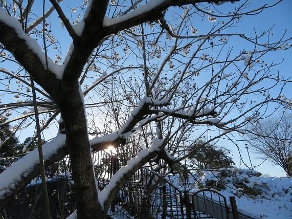 5C02 雪の花 0123