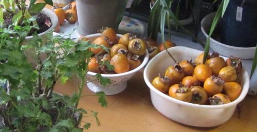 平成29年 柿