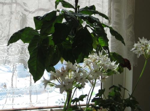 雪の日の窓から