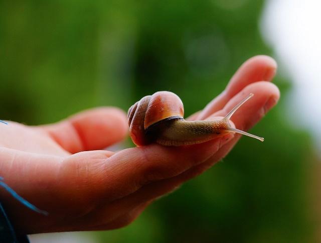 snail-1396510_1280[640]