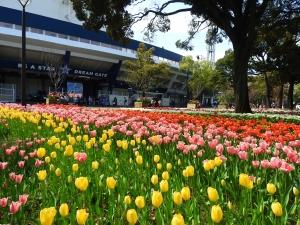 春の楽しみ!