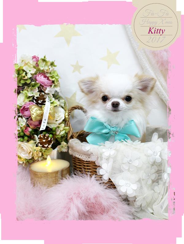 kittyちゃん 12-1