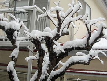隣家の柿の木ー冬巻頭