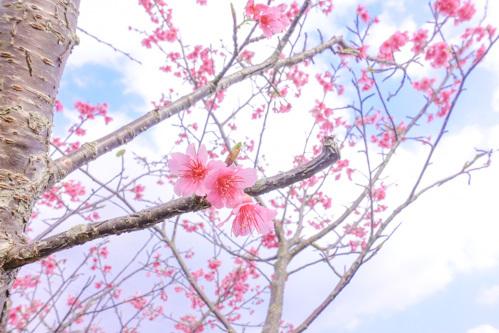 blog-07515.jpg