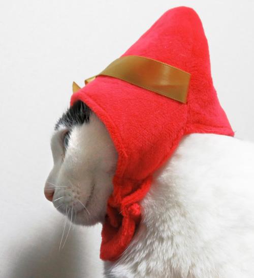 赤い帽子の横顔ちっぷ