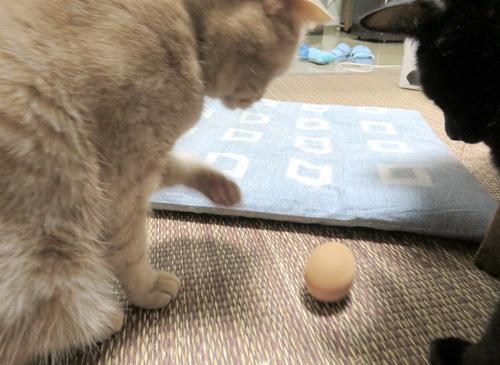 卵を見るきなことチョコ
