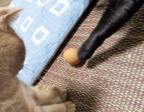 卵を触るチョコ