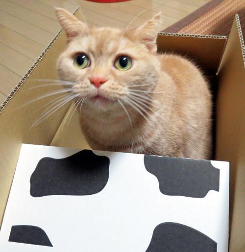 牛が箱の中のきなこ