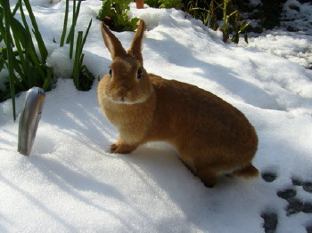 雪の足跡 (3)