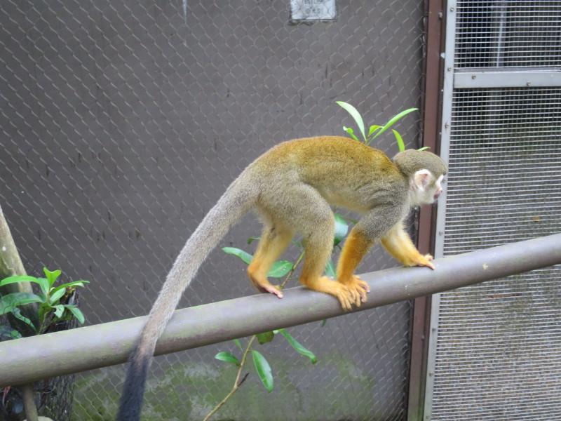 リバーサファリ 間近で動物見れる