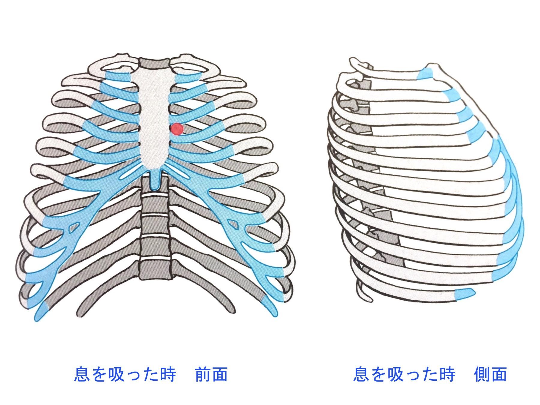 rib-in.jpg