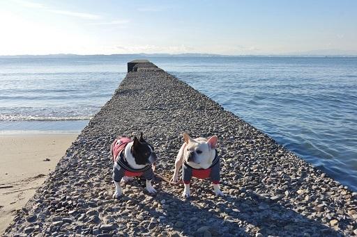 海ふるうた