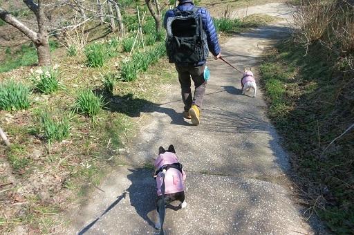 3-1散歩