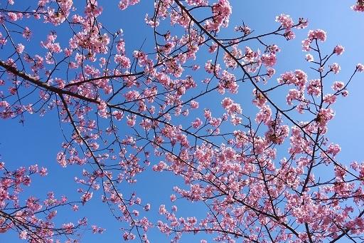 3-1桜空2
