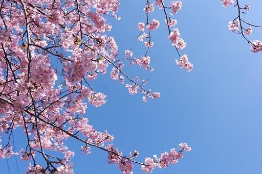 3-1桜空