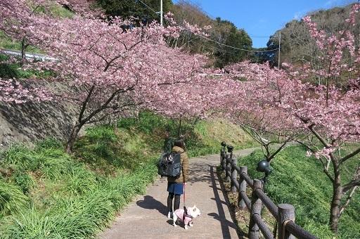 3-1桜ママふるうた